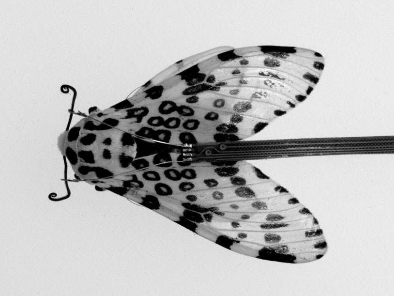 MothDevice-1_gs